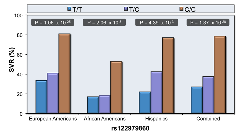 Patients with genotype 1 hepatitis C received treatment with 48 weeks of peginterferon and ribavirin. This graphic showed the response to therapy based on IL28B genotype (T/T, T/C, C/C) and based on the patient's ethnicity. Patients with CC genotype have higher SVR rates regardless of ethnicity. A lower percentage of African Americans have CC genotype, which correlates with lower overall response to therapy.<div>Source: Ge D, Fellay J, Thompson AJ, et al.  Genetic variation in IL28B predicts hepatitis C treatment-induced viral clearance.  Nature. 2009;461:399-401.</div>