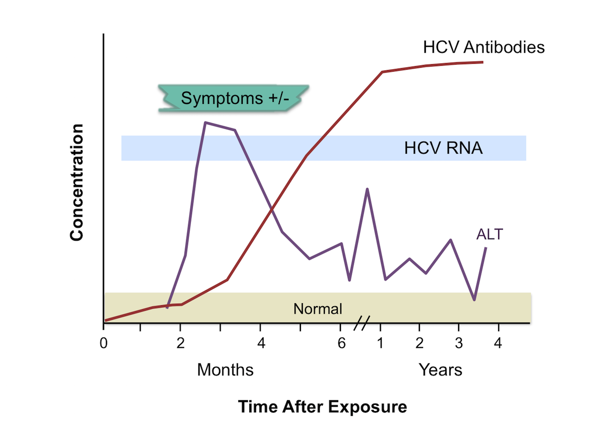 Note the temporal appearance of laboratory markers typically observed with acute hepatitis C infection: HCV RNA levels first become detectable, followed by increases in ALT levels, and then detectable HCV antibody.<div>Source: Centers for Disease Control and Prevention (CDC).</div>