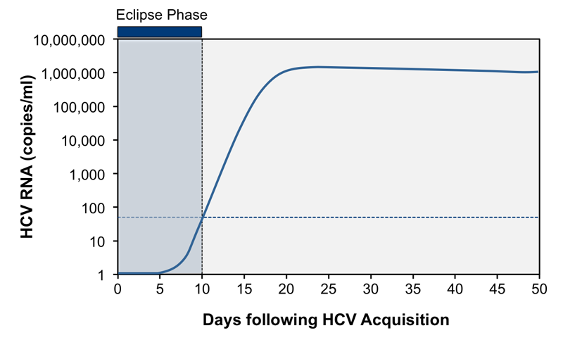 The eclipse phase is the time between HCV infection and the appearance of detectable HCV RNA.<div>Source: Glynn SA, Wright DJ, Kleinman SH, et al. Dynamics of viremia in early hepatitis C virus infection. Transfusion. 2005;45:994-1002.</div>
