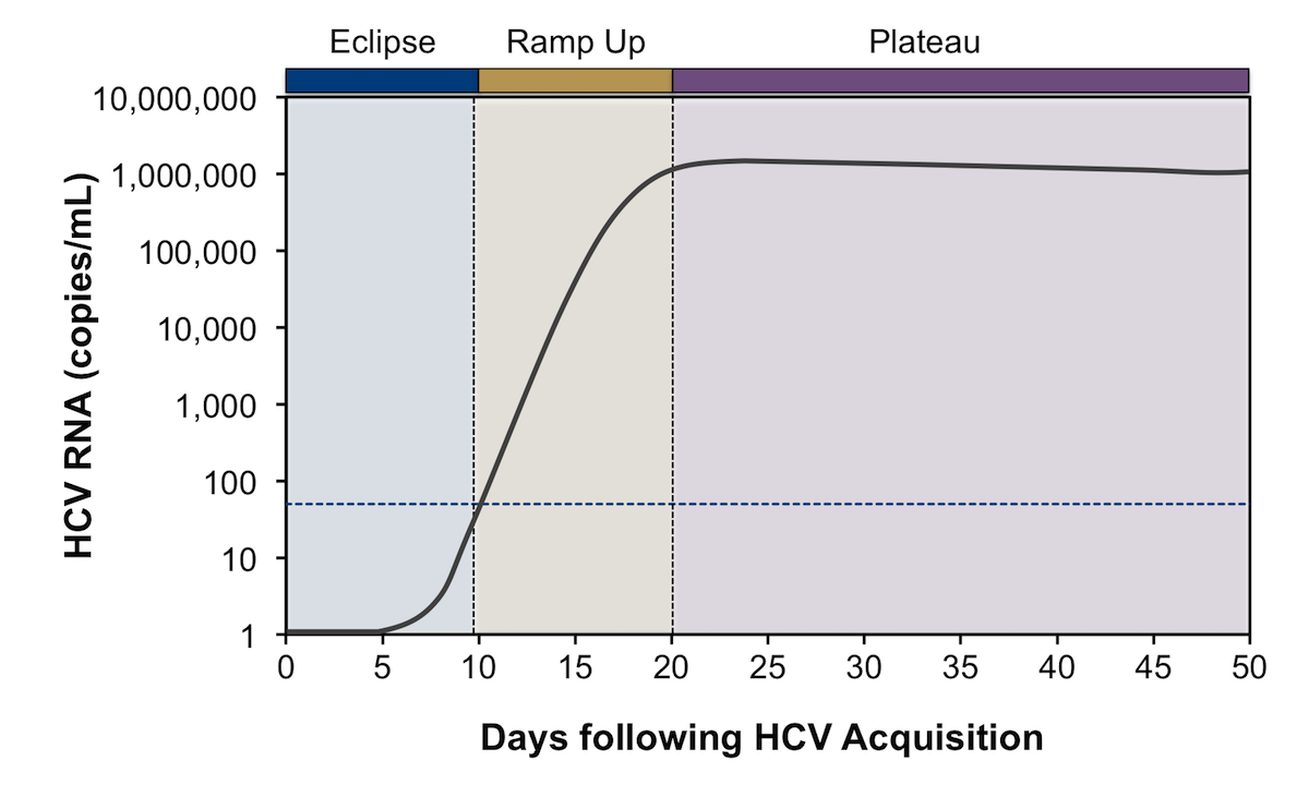 This graph illustrates early phases of viral dynamics observed following acquisition of HCV: eclipse, ramp up, and plateau.<div>Source: Glynn SA, Wright DJ, Kleinman SH, et al. Dynamics of viremia in early hepatitis C virus infection. Transfusion. 2005;45:994-1002.</div>
