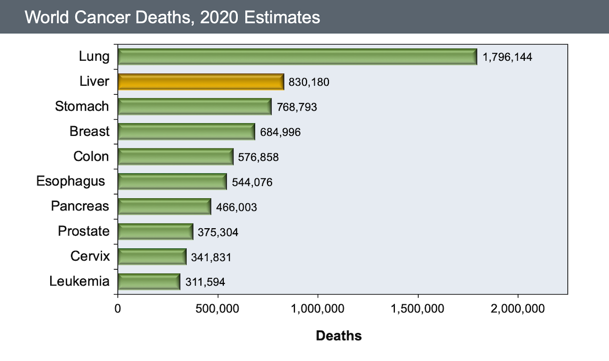 This graphic shows the number of global cancer deaths, by type of cancer in 2008. Approximately 700,000 persons died of HCC in 2008.<div>Source: World Health Organization. January 2013.</div>